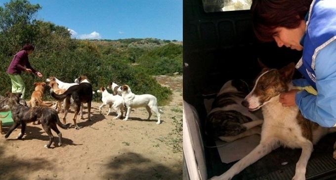 Enpa: accalappiati i 31 cani del parco archeologico di Selinunte