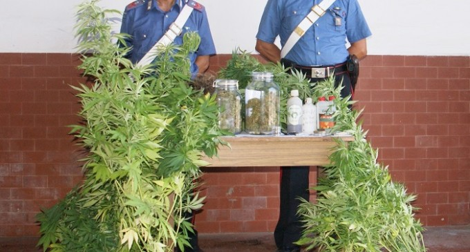Trapani: scovata dai Carabinieri una piantagione domestica, un arresto