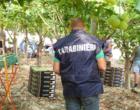 Lotta al caporalato in agricoltura in provincia: controlli del NIL e dei Carabinieri