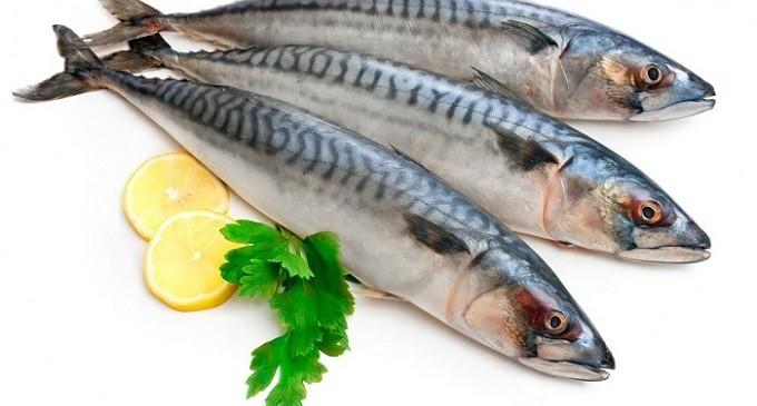 """Il pesce azzurro del Golfo di Castellammare protagonista del """"Fish Fest"""""""