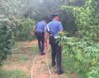 [VIDEO] Scoperte a Marsala 252 piante di marijuana: arrestato il proprietario