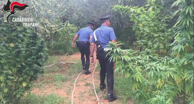 [VIDEO] Scoperte a Marsala 252 piante di marijuana: arrestato il proprietario