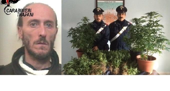"""Alcamo: arrestato dai Carabinieri insospettabile """"pollice verde"""""""