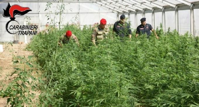 Petrosino: Carabinieri sequestrano una piantagione di cannabis e arrestano il responsabile