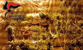 Castelvetrano: arrestata giovane coppia per detenzione e coltivazione di sostanza stupefacente