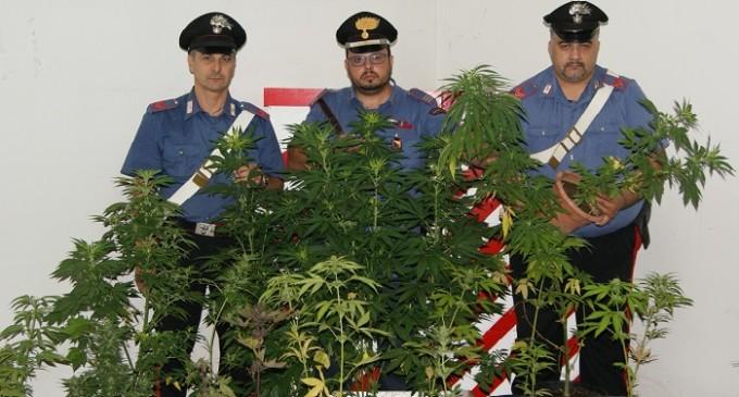 Salemi: un arresto dei Carabinieri per coltivazione e detenzione di stupefacente