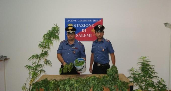 Salemi, Carabinieri: rinvenimento di piantagione di marijuana