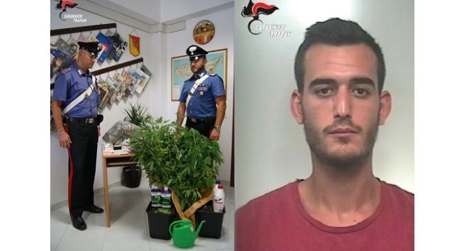 Mazara del Vallo: rinvenimento di piantagione di marijuana