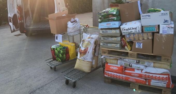 Trapani: attivato punto raccolta animali vittime terremoto