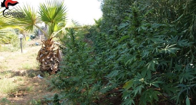 Marsala: rivenuta dai Carabinieri un'altra piantagione, un arresto