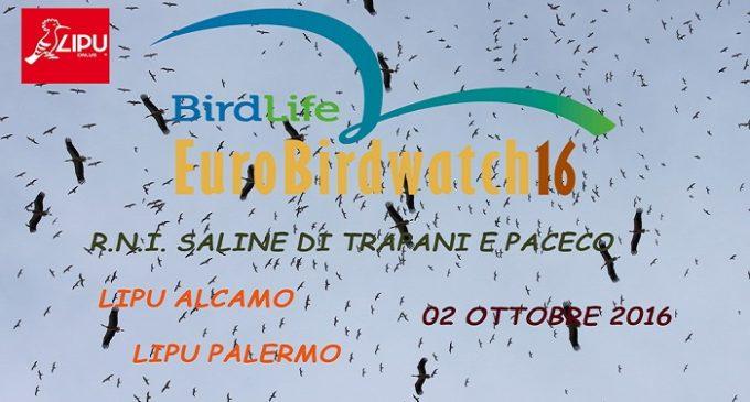 Eurobirdwatching 2016, escursione Lipu alle Saline di Trapani