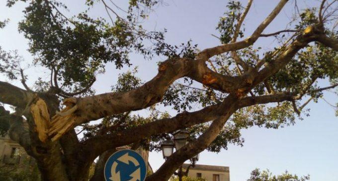 Salemi, albero spezzato in piazza. Verifiche in corso