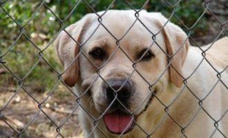 Partanna, nuove proposte per la microchippatura dei cani. In trasferimento gli uffici dell'Asp