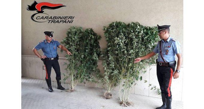 Castelvetrano, coltivava piante di marijuana. Arrestato dai Carabinieri