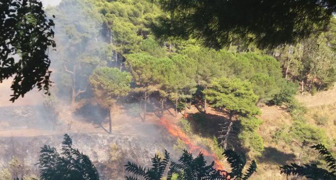 Salemi, vasto incendio a Pioppo. Le fiamme lambiscono le abitazioni (VIDEO)