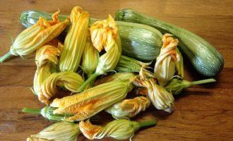 Fiori di zucca: fritti, ripieni ma non solo. Le sfiziose ricette dell'estate