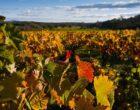 Oltre 8 milioni di euro per promuovere il vino siciliano all'estero. Il bando regionale