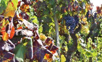 Salemi, siccità: mozione di richiesta contributi per le aziende agricole
