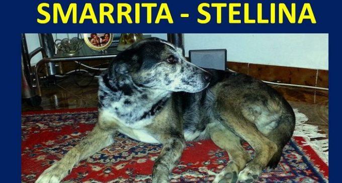 Smarrito cane a Campobello. Appello per ritrovare Stellina