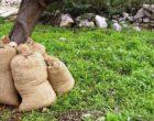 Raccolta olive, senegalesi pagati 3 euro l'ora. Sanzioni per 51 mila euro per due imprenditori di Campobello
