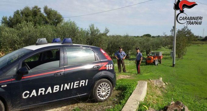Tagliano alberi di ulivo con la motosega per rubare le olive, tre arresti