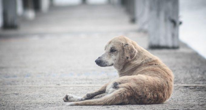 Investe un cane al Camarro. Risarciti i danni dal Comune di Partanna