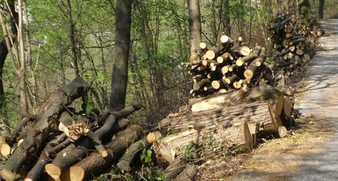 Montagna Grande, tenta di rubare otto quintali di legna. Colto in flagranza di reato dalla Forestale