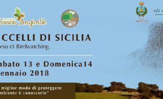 Uccelli di Sicilia, il corso di Birdwatching tra le saline di Trapani e Paceco
