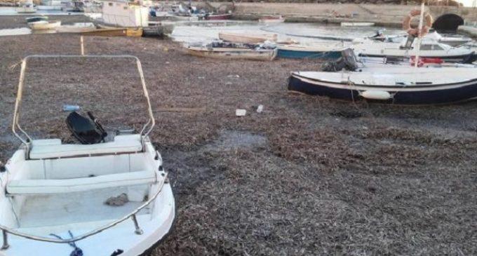 """Sabbia e alghe al porto di Selinunte, Pescatori:""""Costruzione errata del porto"""""""