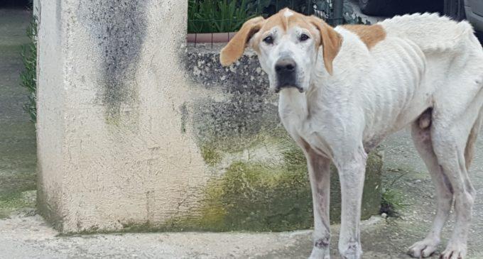 Salemi, i costi dei cani randagi tra cura, mantenimento e l'avvio del canile