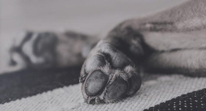 Perchè i cani vivono meno delle persone? La risposta di un bambino di 6 anni