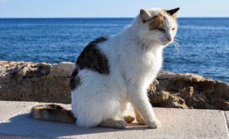 Bastona un gatto. Condanna storica: 4 mesi di reclusione per un marittimo di Trapani
