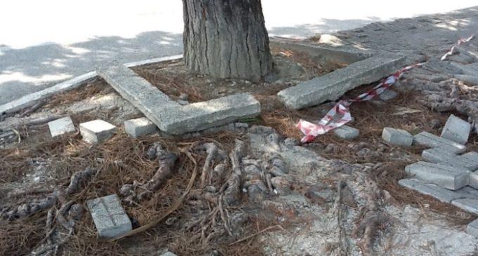 A Gibellina il taglio degli alberi è gratuito. Baratto per i lavori di potatura e estirpazione