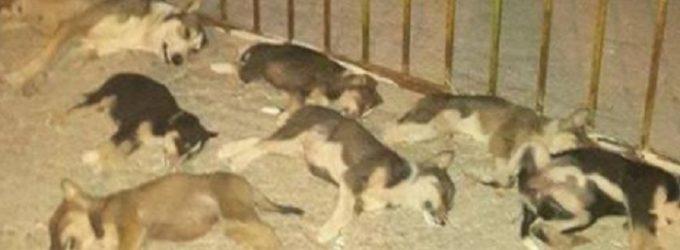 Esche avvelenate: 15 cani uccisi in località Muciare