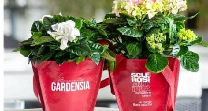 """Vita: """"Benvenuta Gardensia"""", il 3, 4 e 8 Marzo una pianta per la ricerca"""