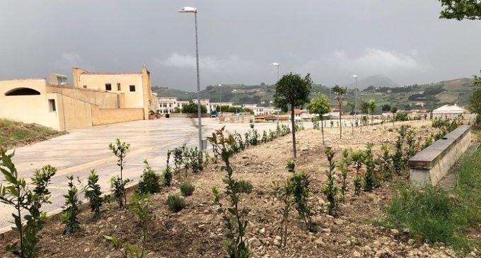 """Al centro Kim un giardino ricco di alberi. Il nuovo progetto """"green"""" del Rotary club Salemi"""