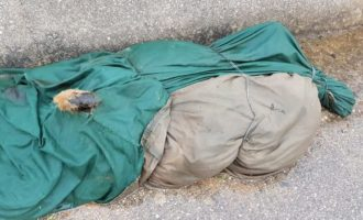 Castelvetrano, macabro ritrovamento in contrada Fontanelle