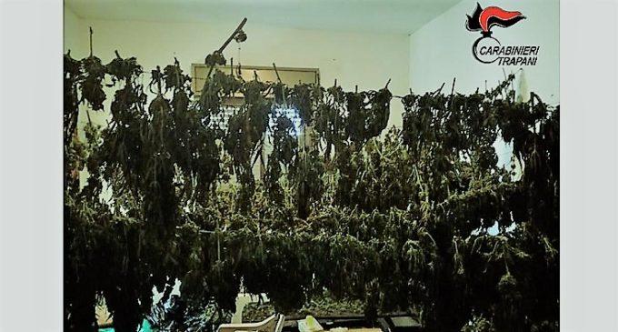 Mezzo quintale di marijuana, arrestati 3 giovani dai carabinieri di Marsala