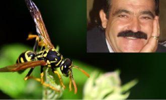 Letali punture di vespe: Muore per shock anafilattico imprenditore di Campobello