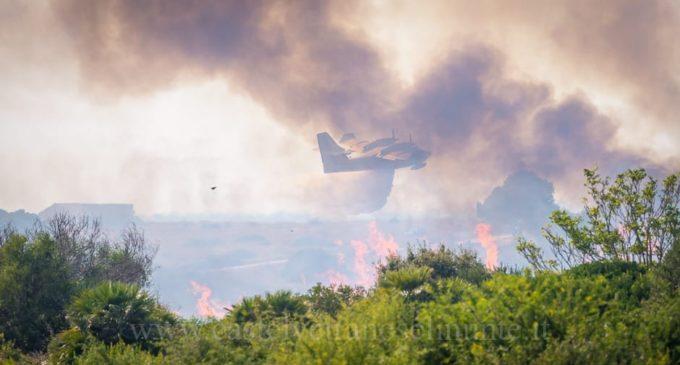 Selinunte, a fuoco la macchia mediterranea del Parco. Chiuso l'accesso al pubblico