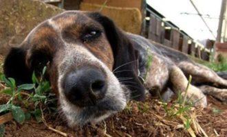 Salemi, a Bagnitelli moria di cani avvelenati