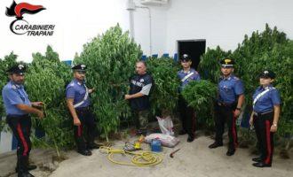 Sorpresi ad innaffiare la piantagione di marijuana. Due arresti a Mazara