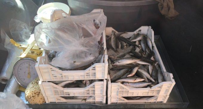 Vendeva pesce per strada senza autorizzazione. Scatta il sequestro dei Vigili a Campobello