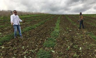 Agricoltura sociale: a Calatafimi  un progetto per la coltivazione di erbe aromatiche