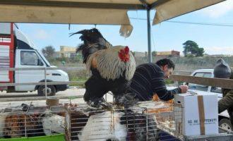 """Partanna, nessun aumento delle tariffe per l'affitto di un'area del mercatino. Catania: """"Voci infondate"""""""
