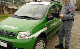Carabinieri Forestali, eseguite due ordinanze di custodia cautelare per traffico illecito di rifiuti e inquinamento ambientale