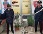Coltivazione e spaccio di droga, arrestato dai Carabinieri 45enne