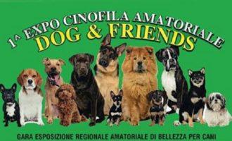 Castelvetrano, arriva la I^ sfilata cinofila dedicata anche ai cani meticci